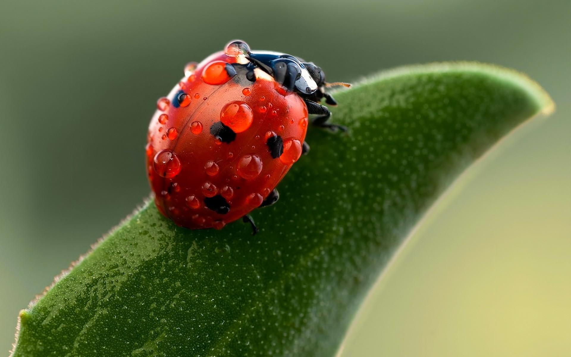 Ladybug-Macro-Photography